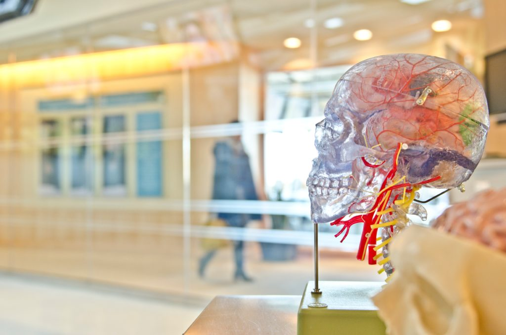 Image of an artificial skull with brain visualisation